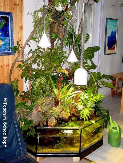 frisch beflanzt